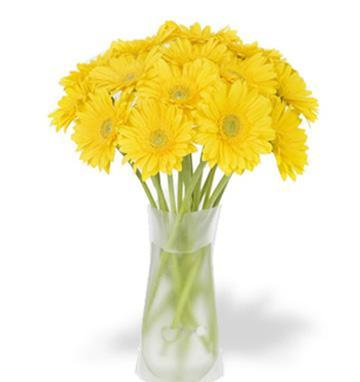 24 Yellow gerberas vase