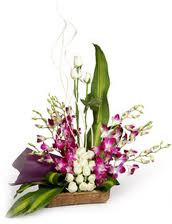 Orchids in a wicker basket with ferns